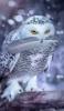 silverest_mount userpic