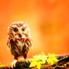 Gen: Owl