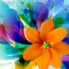 Flower splashy orange