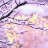 lilliarosa: Wintersparkle