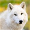 snowwolfmystic