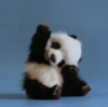 hey_panda