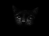 gothblack userpic