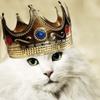 кот, корона