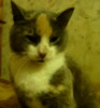 catcatran userpic