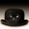 stetson_cat userpic