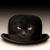 stetson_cat userpic