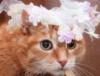 кот-невеста
