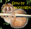 a honeyed wine at night: slow loris mead