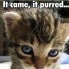 k1ttycat userpic
