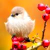 leesa_perrie: Bird 3