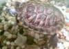 turtledudette userpic