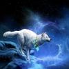 luna_wolf_white userpic