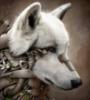 bigblackwolf userpic
