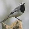 egfinch userpic