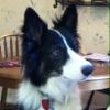 emmabcdog userpic