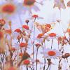 undefined: ромашковое поле