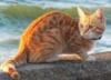 Кошка на море