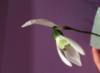 fmv_love_flower userpic