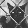 кот в тюрьме