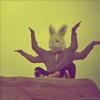 om_rabbit userpic