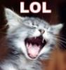 Deborah Henning-Huff: LOL Kitten