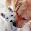 puppies; snuggles