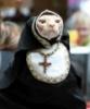 монашка cat