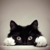 sassy_cat