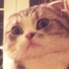 meredith judging you