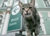 Музейный кот