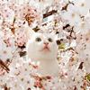 кошка в вишне