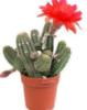 vashaotdushina: кактус