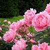 цветы каждый день для всех