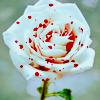 speckled rose