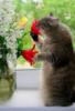 котик нюхает букет