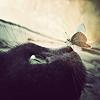 black_cat_27_butterfly