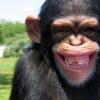 nnaked_ape