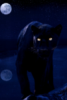 shadowpanther10 userpic
