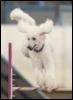winniepoodle userpic