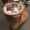 Cats: Kitty in boot icon
