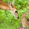 Animals: Deer & Rabbit