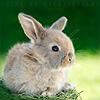 Animals: Rabbit