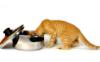 котик повар