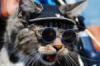 kind_tomcat userpic