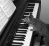Шла котейка по роялю