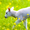 leesa_perrie: Spring