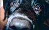 unadog userpic
