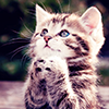 Cats :: Kitten Begging