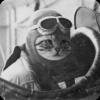 kotklaritin: kot pilot
